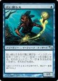 呪い捕らえ/Cursecatcher (SHM)