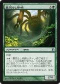 墓荒らし蜘蛛/Graverobber Spider (BNG)