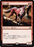 災いの狼/Scourge Wolf (SOI)