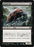 葬儀甲虫/Mortician Beetle (ROE)