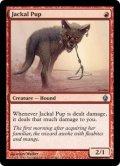 ジャッカルの仔/Jackal Pup (PD2)