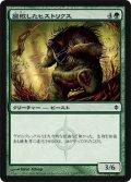 腐敗したヒストリクス/Rotted Hystrix (NPH)