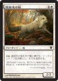 銀筋毛の狐/Silverchase Fox (ISD)