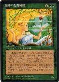 新緑の女魔術師/Verduran Enchantress【日本語:黒枠】(4ED)