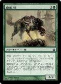 腐敗狼/Rot Wolf (MBS)