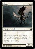 枝モズ/Tine Shrike (MBS)