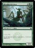 絡み森のカマキリ/Tangle Mantis (MBS)