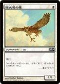 陽光尾の鷹/Suntail Hawk (M14)