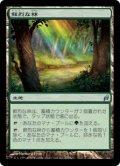 鮮烈な林/Vivid Grove (LRW)