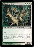 萎れ葉の騎兵/Wilt-Leaf Cavaliers (SHM)