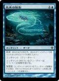 長魚の陰影/Eel Umbra (ROE)