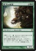 狼茨の精霊/Wolfbriar Elemental (CNS)