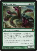 雑食のハイドラ/Hydra Omnivore (CNS)