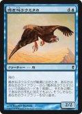 鳴き叫ぶウミタカ/Screaming Seahawk (CNS)