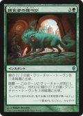 捕食者の雄叫び/Predator's Howl (CNS)