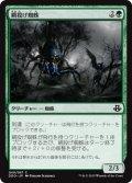 網投げ蜘蛛/Netcaster Spider (DDO)