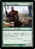 ガツタフの羊飼い/Gatstaf Shepherd (ISD)