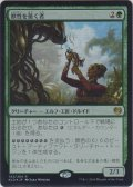 獣性を築く者/Architect of the Untamed (Prerelease Card)【Promo】
