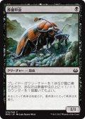 葬儀甲虫/Mortician Beetle (MM3)