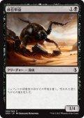 砂丘甲虫/Dune Beetle (AKH)