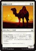 孤高のラクダ/Solitary Camel (HOU)