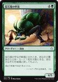 採石場の甲虫/Quarry Beetle (HOU)