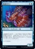 有刺カサゴ/Stinging Lionfish (THB)