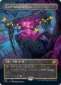 インダサのトライオーム/Indatha Triome (IKO)【ショーケース・フレーム】
