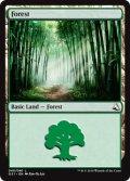 森/Forest (GS1)