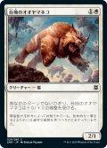 台地のオオヤマネコ/Mesa Lynx (ZNR)