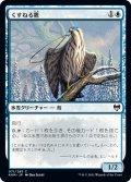 くすねる鷹/Pilfering Hawk (KHM)
