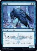 占い鴉/Augury Raven (KHM)