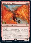 回収するフェニックス/Retriever Phoenix (STX)