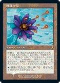 睡蓮の花/Lotus Bloom (Buy a Box)