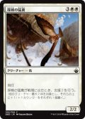 探検の猛禽/Expedition Raptor (BBD)