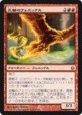 炎輪のフェニックス/Flame-Wreathed Phoenix (BNG)《Foil》