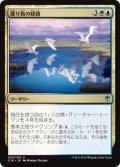 渡り鳥の経路/Migratory Route (C16)