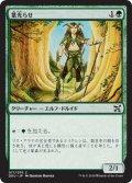 葉光らせ/Leaf Gilder (DDU)