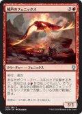 喊声のフェニックス/Warcry Phoenix (DOM)