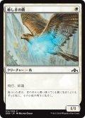癒し手の鷹/Healer's Hawk (GRN)