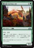 絡み合うモウセンゴケ/Grappling Sundew (GRN)