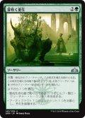 芽吹く更生/Sprouting Renewal (GRN)