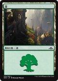 森/Forest (GRN)