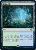 霧深い雨林/Misty Rainforest (MH2)