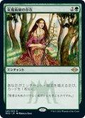 女魔術師の存在/Enchantress's Presence (MH2)