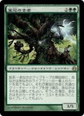 葉冠の古老/Leaf-Crowned Elder (MOR)《Foil》