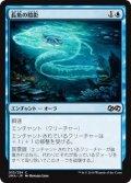 長魚の陰影/Eel Umbra (UMA)