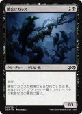 闇告げカラス/Crow of Dark Tidings (UMA)