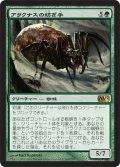 アラクナスの紡ぎ手/Arachnus Spinner (M12)