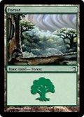 森/Forest (H09)